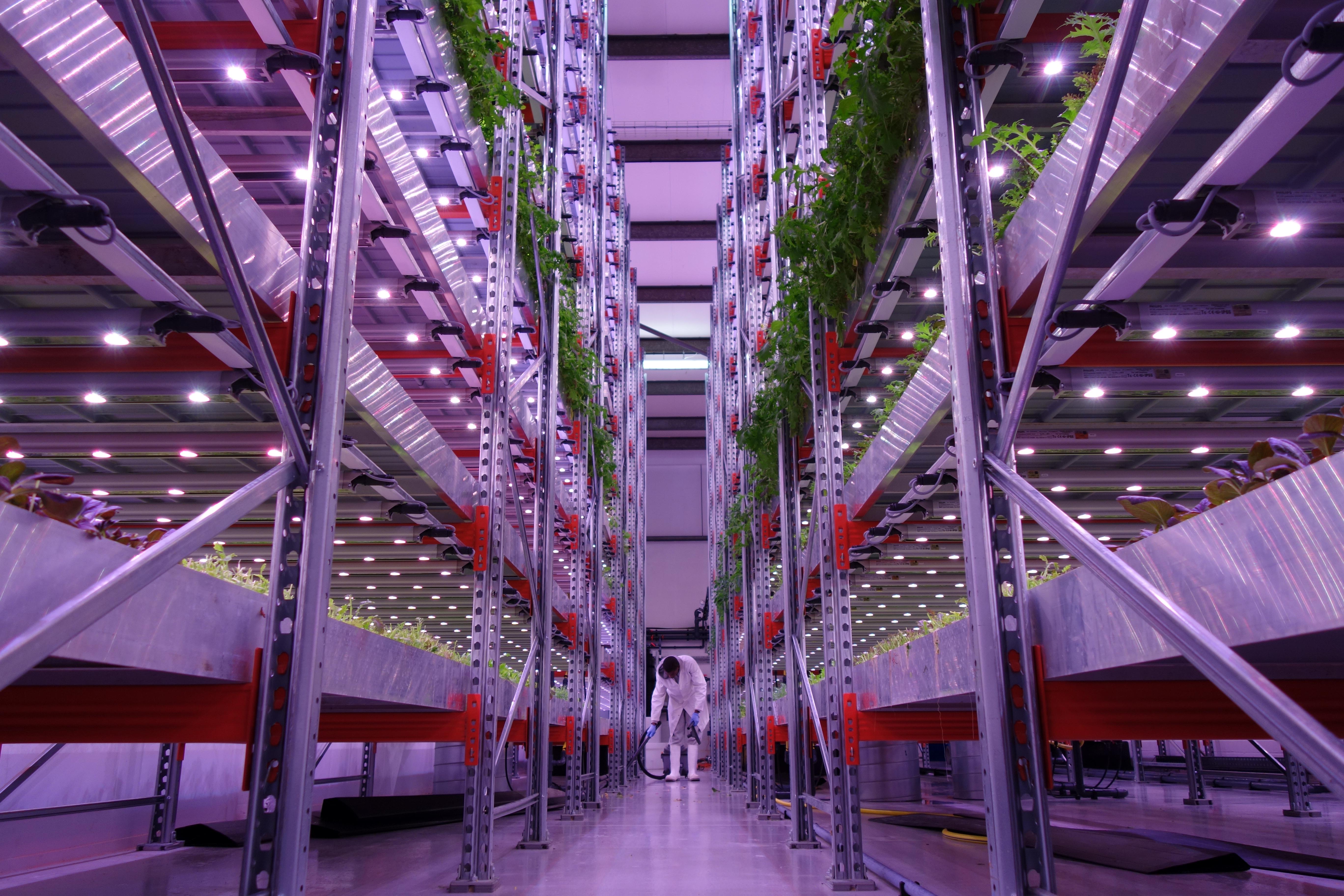 Фермы XXI века: Интернет вещей на рынке вертикального выращивания